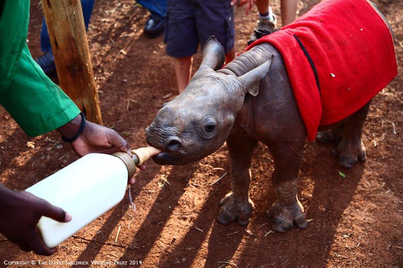 Mokamazi Rhino Sanctuary