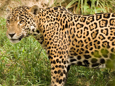 Brazil Trek and Wildlife Tour in the Pantanal