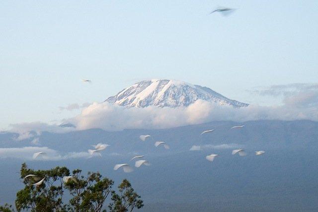 Mt Kilimanjaro Climb