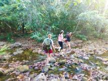 Pantanal Brazil