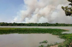Fighting Fires in the Brazil Pantanal